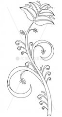 Ornament Floral Outline Arabeske Arabesque