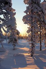 Aekaeskero  Finnland  Winterlandschaft bei Sonnenaufgang