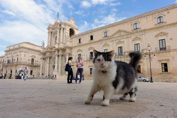 Syrakus  Italien  Katze laeuft allein durch die Stadt