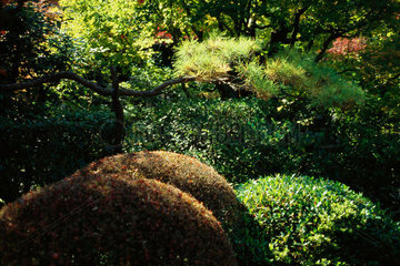 Trees and shrubs in Japanese garden