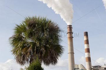 Smokestacks emitting fumes near palm tree