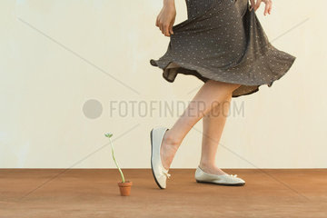 Woman walking past tiny potted plant  holding skirt  cropped view