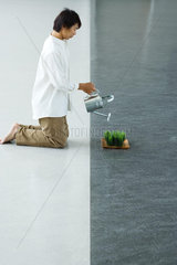 Man kneeling on the ground  watering tray of wheatgrass