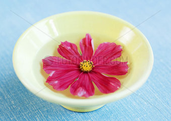 Cosmos floating in bowl of water