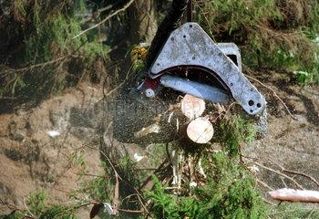 Abholzung eines Waldes in Schweden