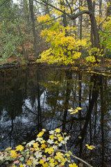Autumn leaves floating on pond