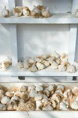 Fresh garlic on shelves