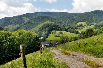 Oberried  Deutschland  Berglandschaft im Schwarzwald