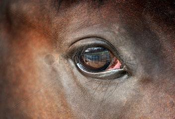 Chantilly  Frankreich  Auge eines Pferdes