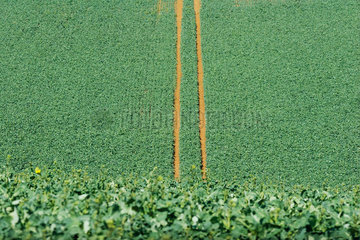 Tire tracks in cultivated field  high angle view
