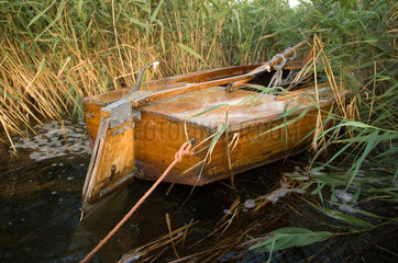 Ruegen  altes Segelboot im Schilf