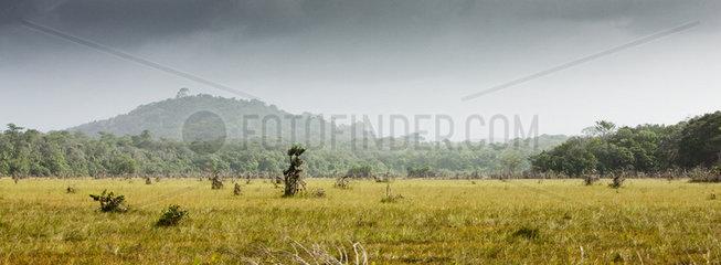 South America  Amazonia  grassy meadow