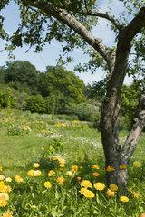 Flowers growing in meadow