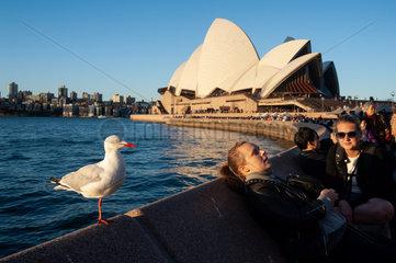 Sydney  Australien  Opernhaus und Moewe am Circular Quay