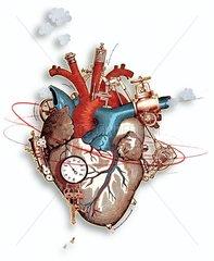 Belastungen des Herzens