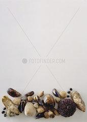 Assortment of shellfish