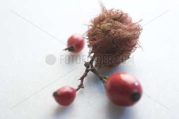 Dried moss and rose hips