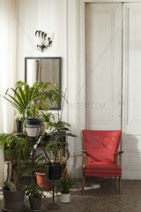 Potted house plants and chair in home interior
