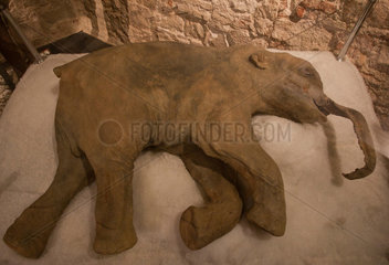 Barcelona  Spanien  Mammut-Baby im Museo del Mamut de Barcelona