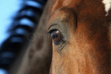 Neustadt/Dosse  Deutschland  Detailaufnahme  Augenpartie eines Pferdes