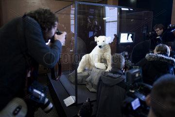 Eisbaer Knut - dermoplastic model