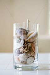 Seashells in glass
