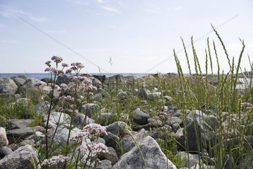 Valerian and tall grass growing at water's edge