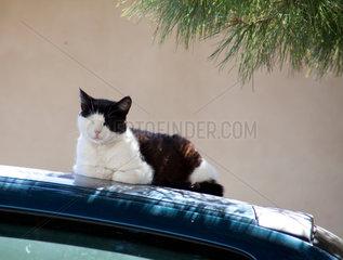 Bonnieux  Frankreich  eine Katze doest im Schatten auf einem Autodach