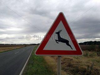 Warnschild vor Wildwechsel