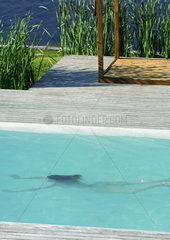 Woman swimming underwater in swimming pool  full length  high angle view
