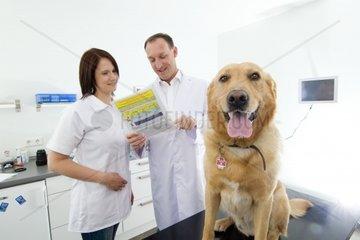 Tierarzt und Assistentin lesen Unterlagen