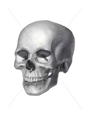 Black and white illustration of a human skull.