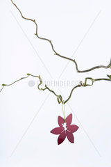 Flower ornament hanging from bare tree branch