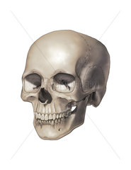 Color illustration of a human skull.