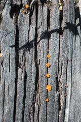 Mushrooms growing on tree trunk  close-up