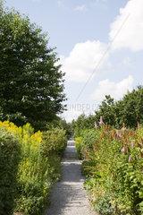 Gravel path leading through botanical garden