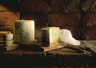 French cheeses  still life