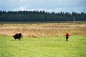 Baeuerin mit ihrer Kuh auf dem Heimweg  Estland