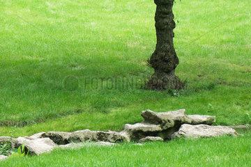 Park scene with rocks  tree trunk
