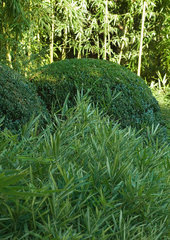 Landscaping  plants and bushes