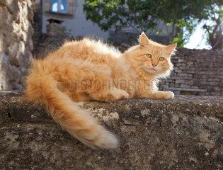 Bonnieux  Frankreich  eine Katze mit aufmerksamem Blick