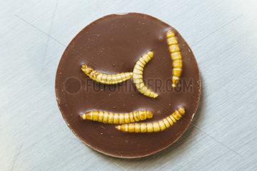 Snack-Insects  Insekten als Nahrungsmittel