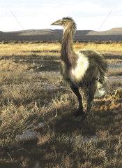 Aepyornis flightless bird roaming the Pleistocene savannas of Madagascar.