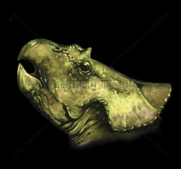 Breviceratops portrait.