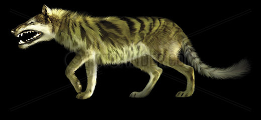 Andrewsarchus lived during the Eocene epoch of Mongolia.