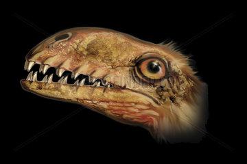 Anurognathus portrait.
