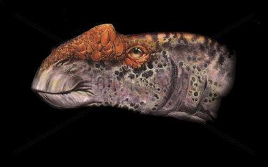 Aralosaurus portrait.