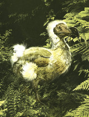 A large dodo bird with twig in mouth.