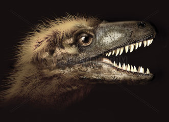 Dromaeosaurus portrait.