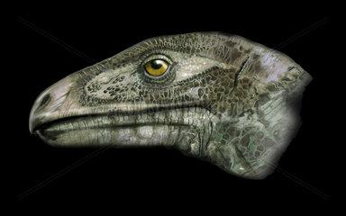 Erlikosaurus portrait.